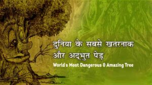 Most-Dangerous-Tree-in-the-world-in-hindi