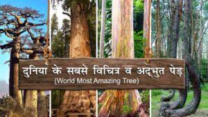world-most-amazing-tree